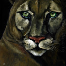 COUGAR_oil_on_canvas_40x40_2012