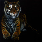 TIGRE_oil_on_canvas_65x54_2012
