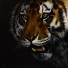 TIGRE_oil_on_paper_25x25_2012